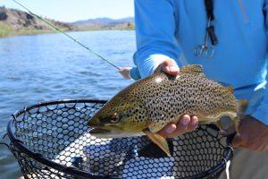 Southeast Idaho Trout Fishing